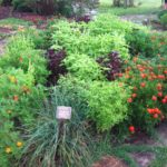 Ask Chef Christy - J.C. Campbell Folk School Herb Garden